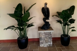 Yes, there is a random bronze eagle in the office.